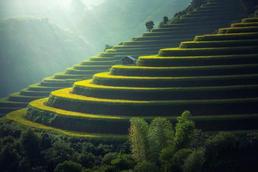 rice plantation, thailand, rice